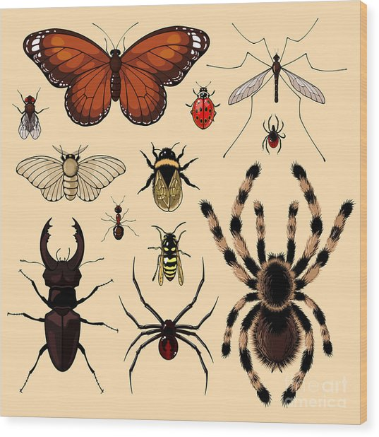 Insects Wood Print