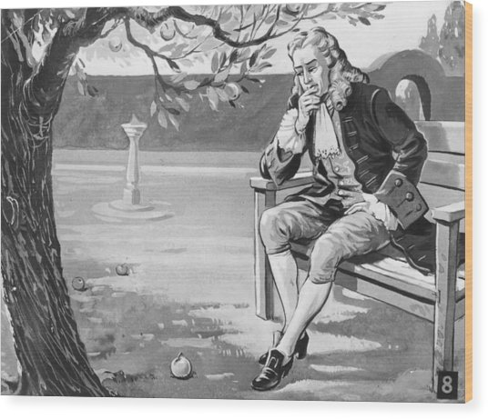 Isaacs Apple Wood Print by Hulton Archive
