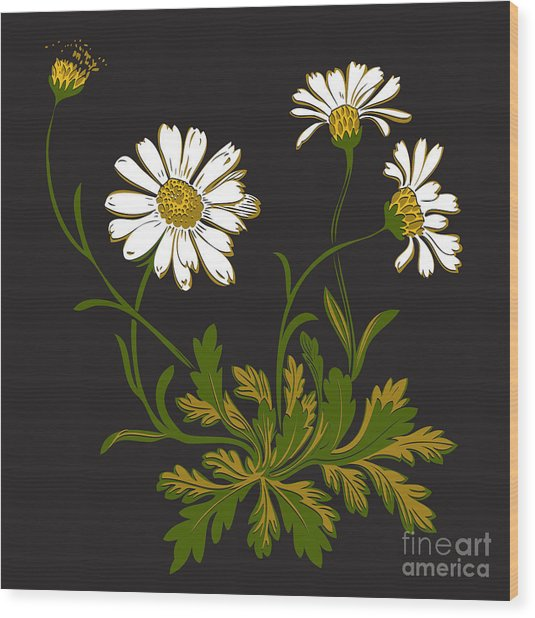 Isolated Flower Blooming Decoration Wood Print