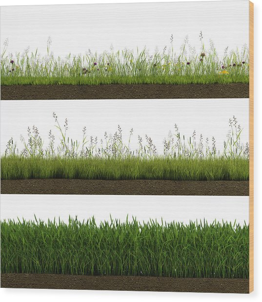 Isolated Grass Wood Print by Ivanwupi