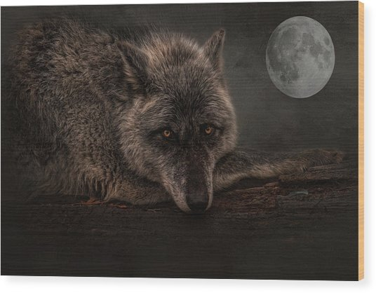 Its A Lonely Night  Wood Print