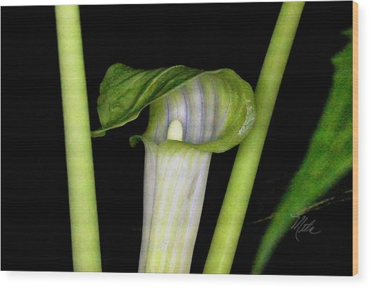 Jack In The Pulpit Wood Print