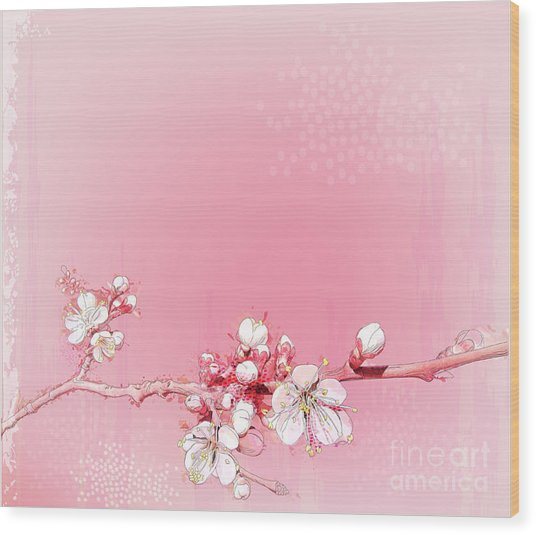 Japanese Cherry Blossoms In Full Bloom Wood Print
