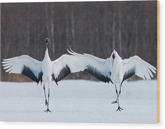 Japanese Cranes Standing Upright Wood Print by Mint Images - Art Wolfe