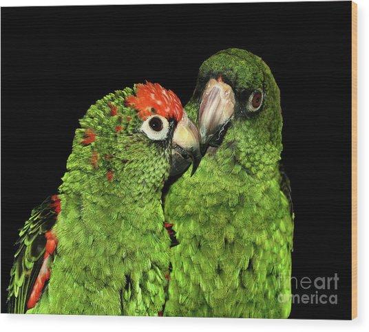 Jardine's Parrots Wood Print
