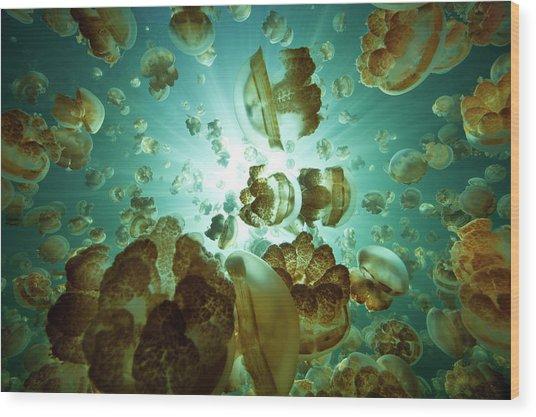 Jellyfish Lake Wood Print