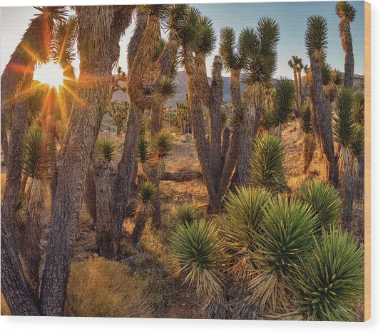 Joshua Trees Wood Print by Leland D Howard