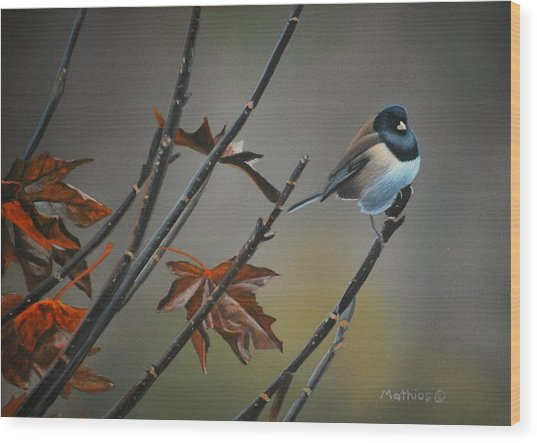 Junco Wood Print