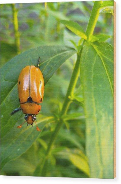 June Bug Wood Print