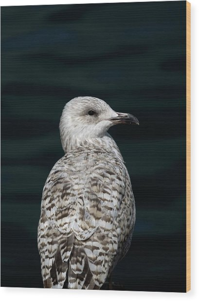 Juvenile With Attitude - Supporting World Wide Fund For Nature Wood Print