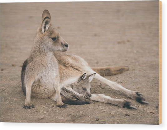 Kangaroo Outside Wood Print