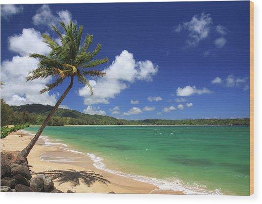 Kauai Hawaii Pacific Ocean Palm Tree By Ejs9