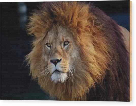 King Lion Wood Print