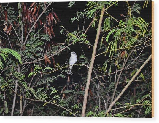 Kingbird At Night Wood Print