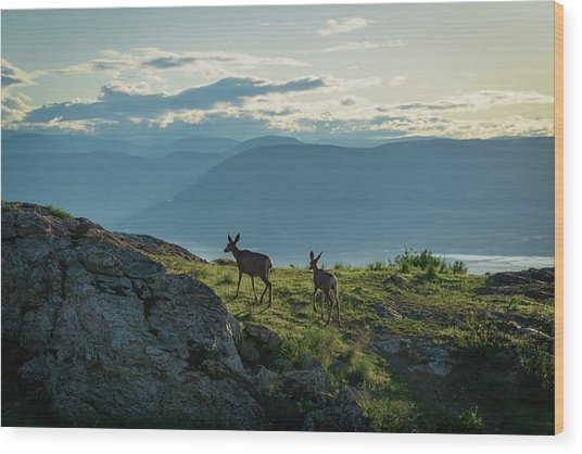 Kuipers Peak Deer Wood Print