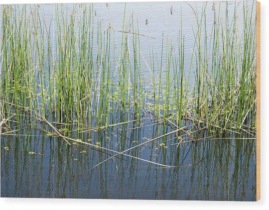 Lake Ilsanjo_533_18 Wood Print