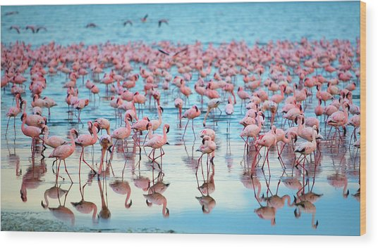 Lake Nakaru Flamingoes Wood Print by Grant Faint