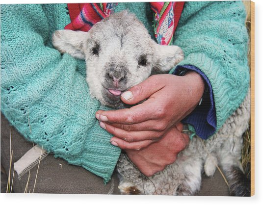 Lamb Sitting On Shepherd-girls Lap Wood Print by Uros Ravbar