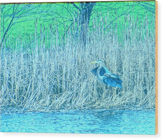 Landing Great Blue Heron Wood Print
