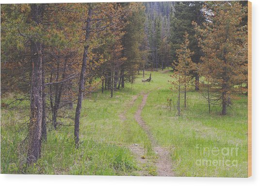 Landscape Image Of Hiking Trail In The Wood Print