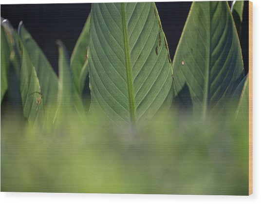 Large Dark Green Leaves Wood Print