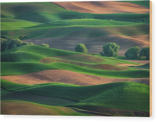 Late Afternoon In The Palouse Wood Print