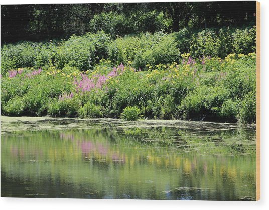 Lavender And Gold Reflections At Chicago Botanical Gardens Wood Print