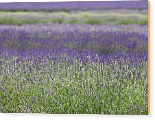 Lavender Wood Print by Andrew Dernie