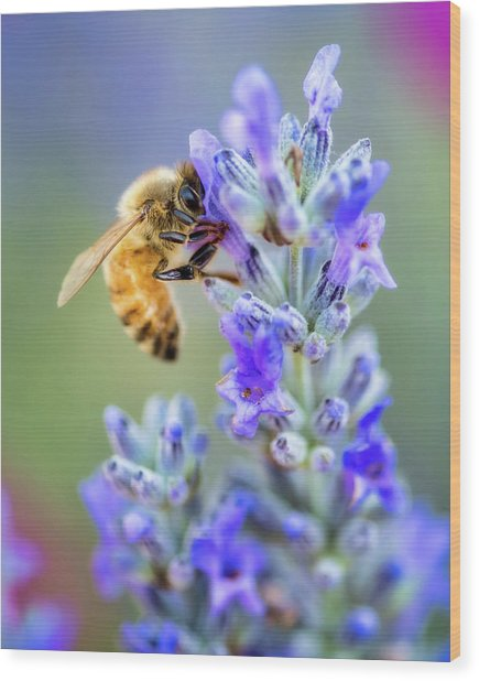 Wood Print featuring the photograph Lavender Bee by Nicole Young
