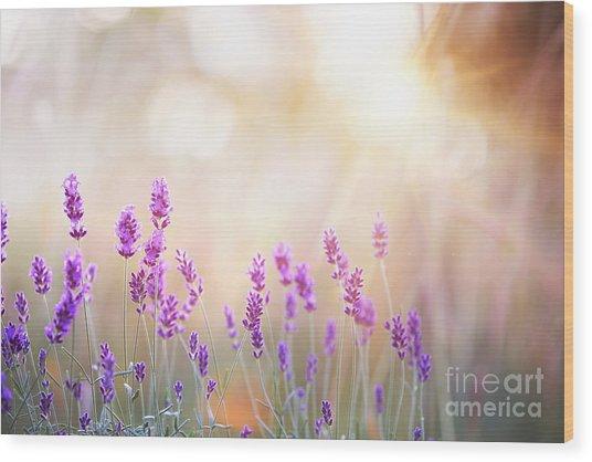 Lavender Bushes Closeup On Sunset Wood Print