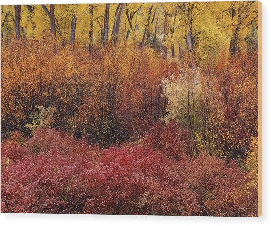 Layers Of Color Wood Print by Leland D Howard