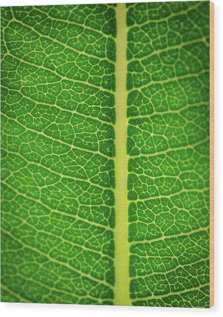 Leafy Detail Wood Print