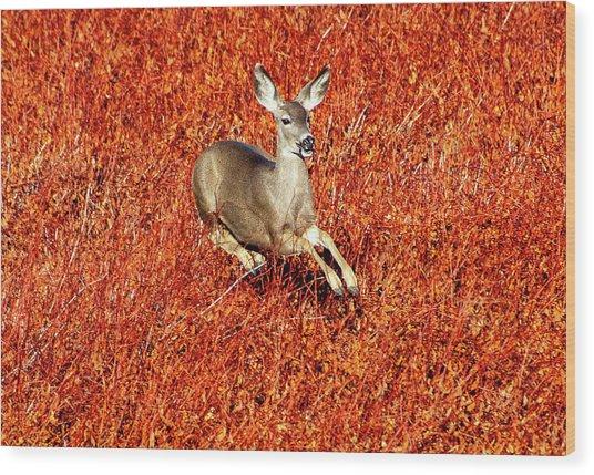 Leaping Deer Wood Print
