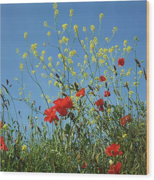 Leaves And Red Flowers Of Poppies Wood Print