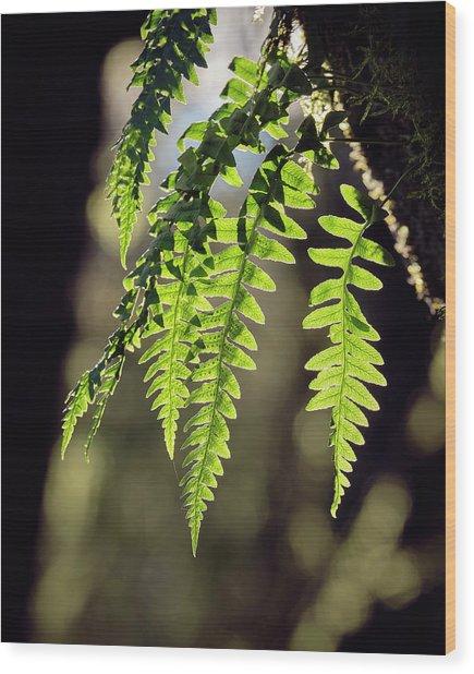 Licorice Fern Wood Print
