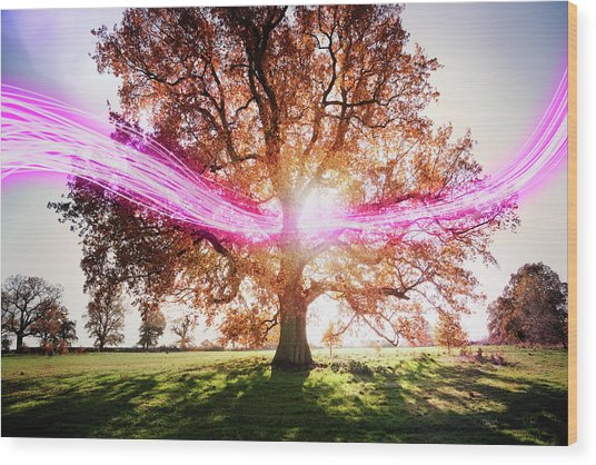 Light Trails Passing Around Tree Wood Print by Robert Decelis Ltd