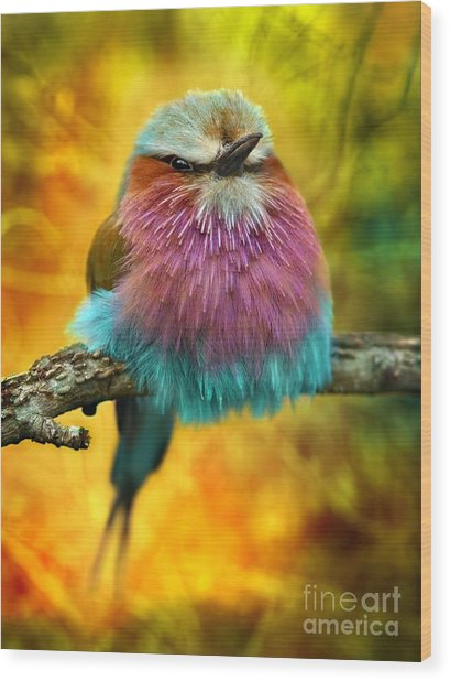 Lilac Breasted Roller Bird With Funky Wood Print