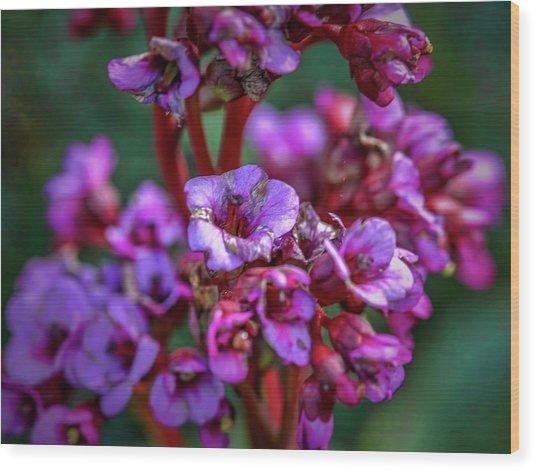 Lilac #h9 Wood Print