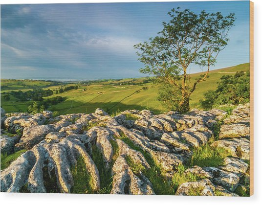 Limestone Pavement, Malham Cove Wood Print by David Ross