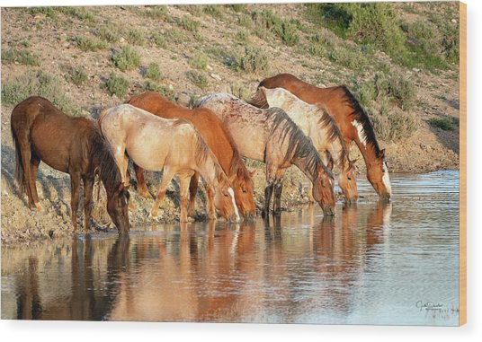 Lineup At The Pond-- Wild Horses Wood Print