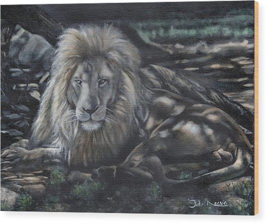Lion In The Shade Wood Print