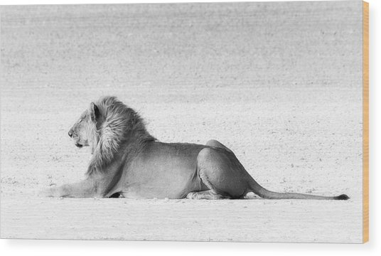 Wood Print featuring the photograph Lion In Wait by Rand