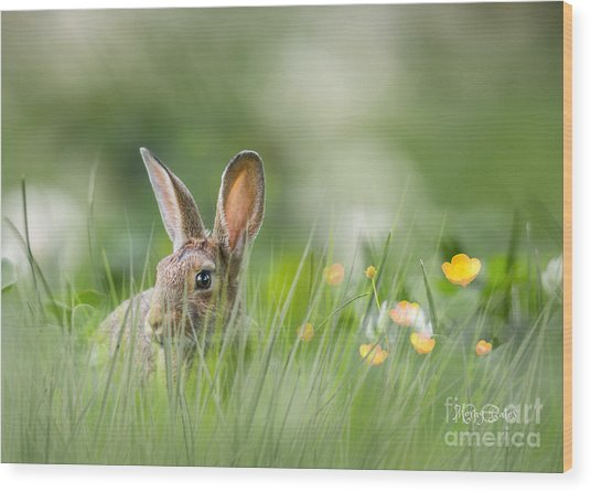 Little Hare Wood Print