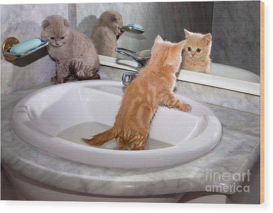 Little Kittens Bathing In The Sink Wood Print by Vvvita