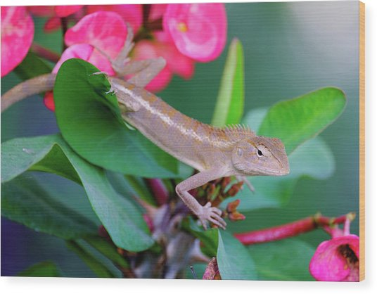 Wood Print featuring the photograph Little Lizard by Nicole Young