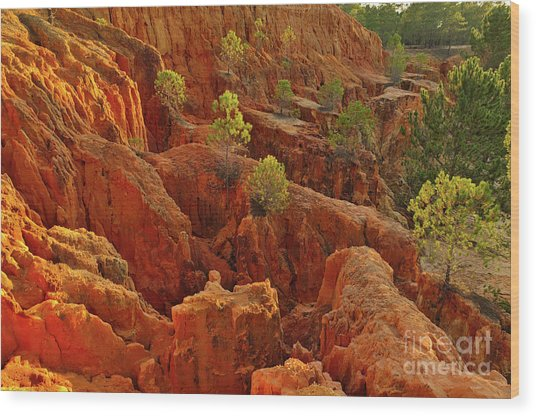 Little Pine Trees Growing On The Valley Cliffs Wood Print