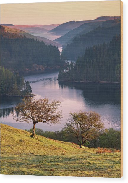 Wood Print featuring the photograph Llyn Brianne Sunrise by Elliott Coleman