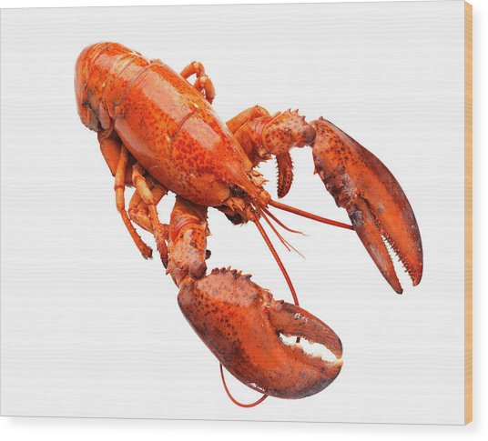 Lobster On White Background Wood Print by Johner Images