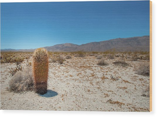 Lone Barrel Cactus Wood Print
