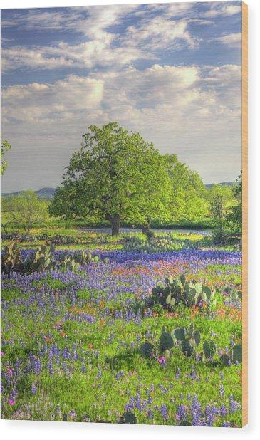 Lone Oak Standing In Field Of Wood Print by Danita Delimont